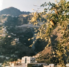 yemen photo 3.jpg